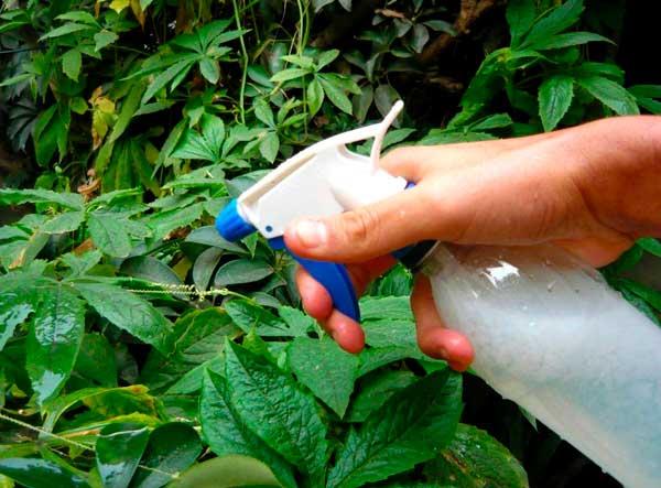 combatir plagas de insectos de forma ecológica
